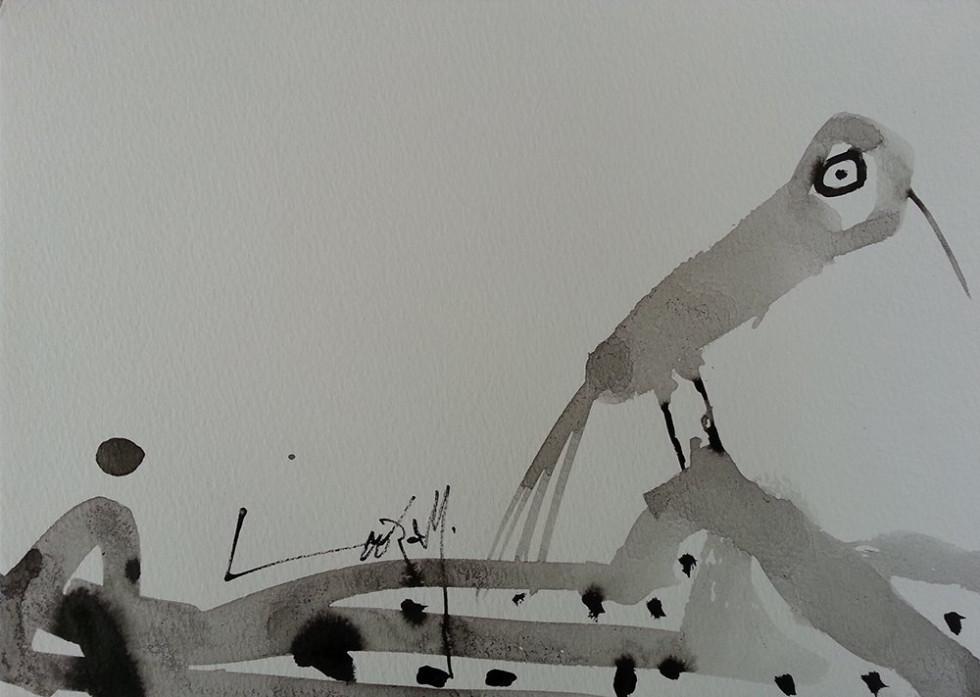 BIRD WITH A BIG EYE
